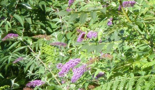 Fremde Pflanzen Bereiten Probleme Im Wald Probleme Mit Den Pflanzen